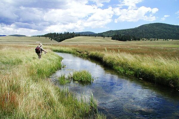 trout - fly fishing stream angler